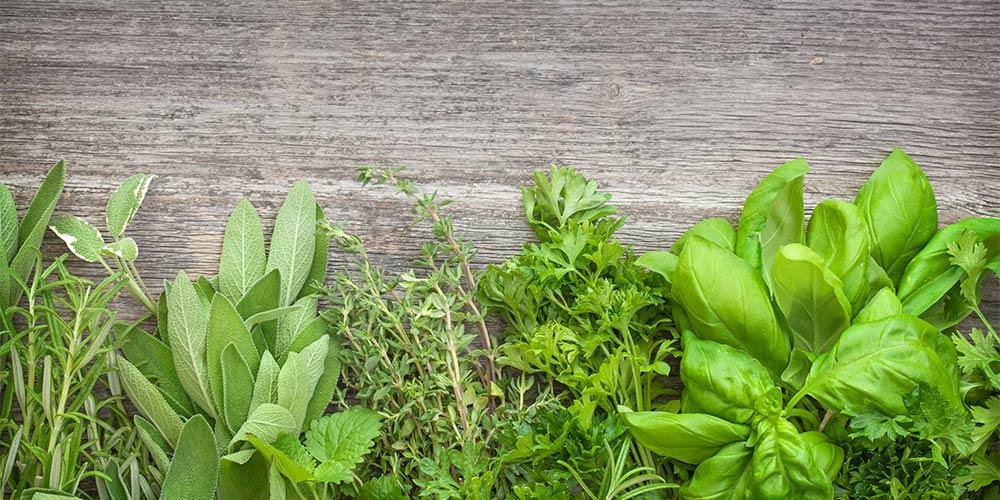 kr uterpflanzen online kaufen heilkr uter duftpflanzen