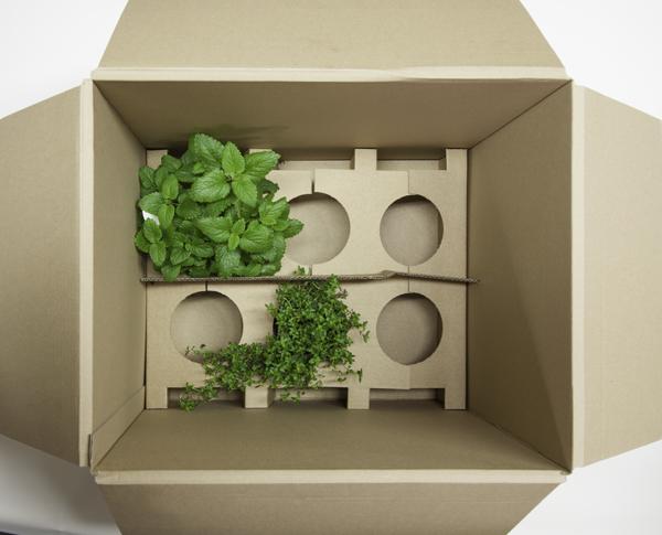 kr uterpflanzen online kaufen heilkr uter duftpflanzen. Black Bedroom Furniture Sets. Home Design Ideas